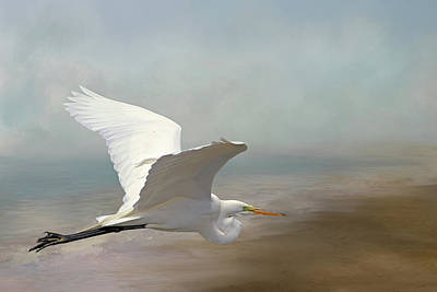 Great Egret Poster by Donna Kennedy