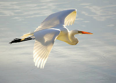 Great Egret Glow Poster