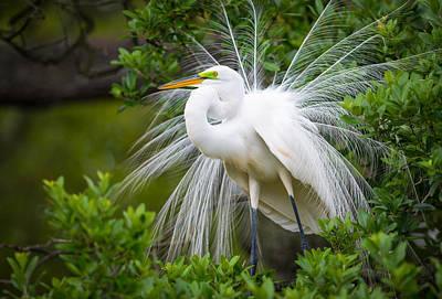 Great Egret Nesting St. Augustine Florida Coastal Bird Nature Poster by Dave Allen
