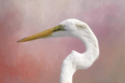 Great Egret Profile Poster