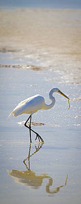 Great Egret With Prey Poster