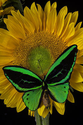 Great Green Butterfly Poster by Garry Gay