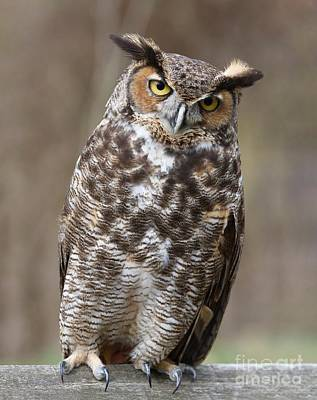 Poster featuring the photograph Great Horned Owl 3 by Chris Scroggins