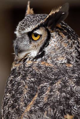 Poster featuring the photograph Great Horned Owl by JT Lewis