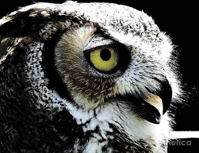 Great Horned Owl Poster by Rose Santuci-Sofranko