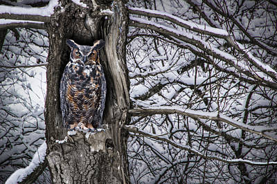 Great Horned Owl Sitting In A Tree During A Snowstorm Poster
