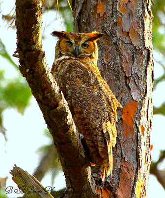 Poster featuring the photograph Great Horned Owl Wink by Barbara Bowen