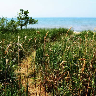 Poster featuring the photograph Great Lake Beach Path by Michelle Calkins