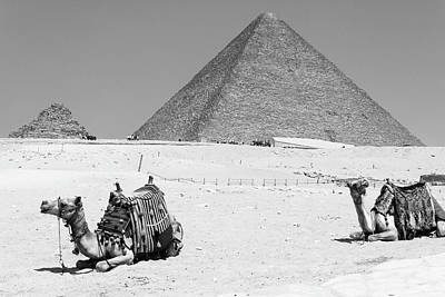 Poster featuring the photograph great pyramids of Giza by Silvia Bruno