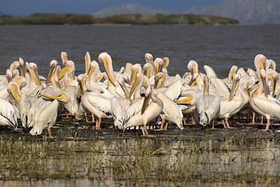 Great Rift Valley Pelicans Poster by Aidan Moran
