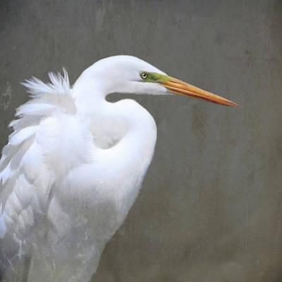 Great White Egret Poster by Karen Lynch