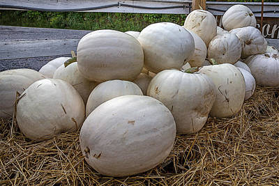 Great White Pumpkins Poster