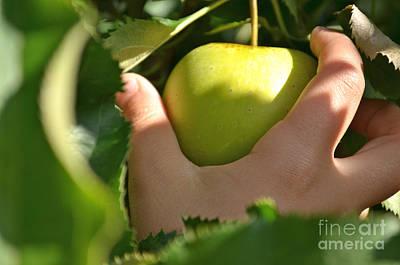 Green Apple Picking Poster