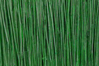 Green Bamboo Poster by Rajendra Pisavadia