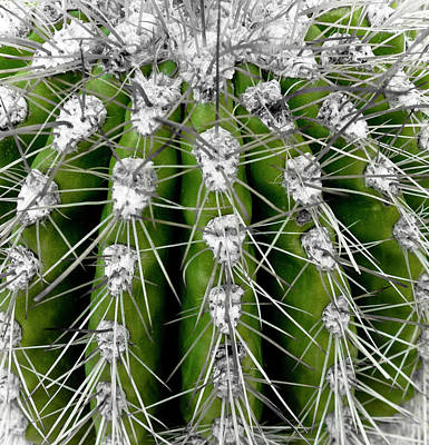 Green Cactus Poster by Frank Tschakert