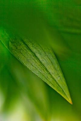 Green Edges Poster by Az Jackson
