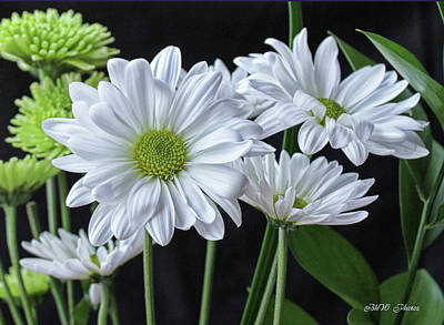 Poster featuring the photograph Green Eyed Daisy by Bonnie Willis