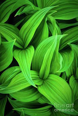 Green False Hellebore Poster by Inge Johnsson
