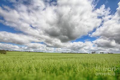 Green Fields 2 Poster by Douglas Barnard