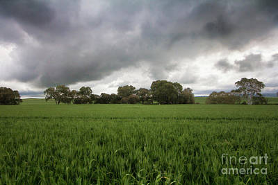 Green Fields 5 Poster by Douglas Barnard