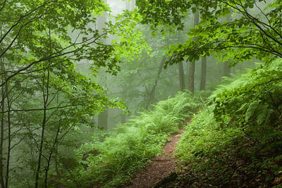 Green Forest Poster by Evgeni Dinev