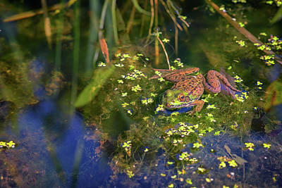 Green Frog In The Pond Poster