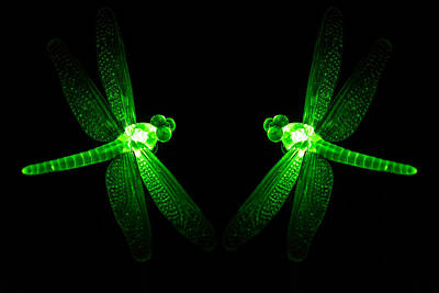 Green Glass Ornament Dragonflys Glowing At Night Poster