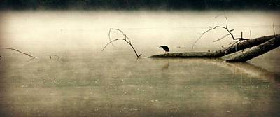 Green Heron In Dawn Mist Poster