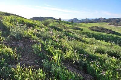 Poster featuring the photograph Green Hills Purple Flowers - Rocky View by Matt Harang