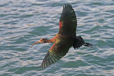 Green Ibis 6 Poster