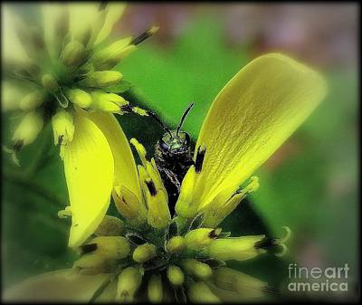 Macro Green Insect Yellow Flower Poster by Len-Stanley Yesh