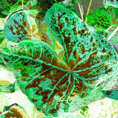 Poster featuring the photograph Green Leafmania 2 by Marianne Dow