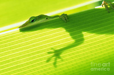 Green Lizard Poster by Bill Brennan - Printscapes