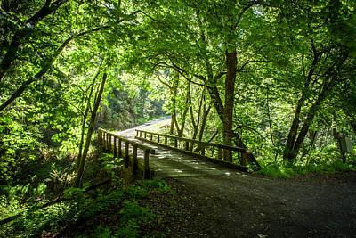 Green Nature Bridge Poster