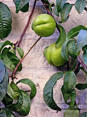 Green Peaches Poster by Sarah Loft