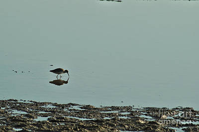 Green Sandpiper And Lagoon Poster