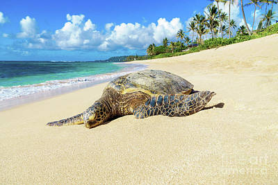 Poster featuring the photograph Green Sea Turtle Hawaii by Hans- Juergen Leschmann