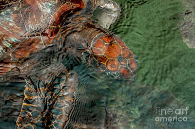 Green Sea Turtle Under Water Poster by Jacques Jacobsz