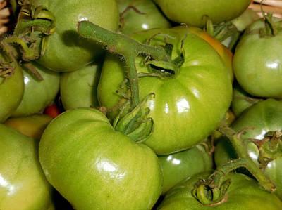 Green Tomato 1 Poster