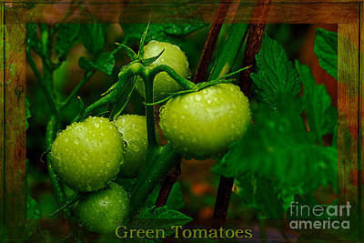 Green Tomatoes By Kaye Menner Poster by Kaye Menner