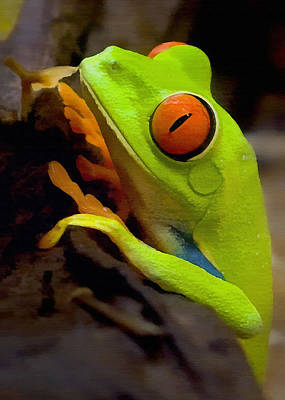 Green Tree Frog Poster by Sharon Foster