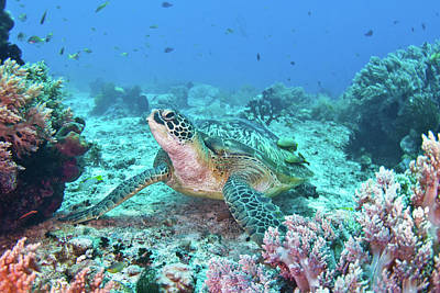 Green Turtle Poster by Wendy A. Capili