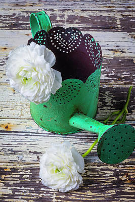 Green Watering Can And Ranunculus Poster