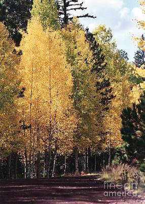 Poster featuring the photograph Greer Arizona Aspen Trees by Juls Adams