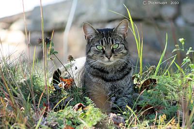 Greyson In Autumn Grass Poster