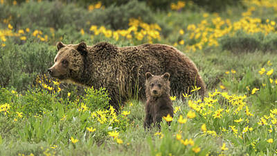 Grizzlies In The Wildflowers Poster