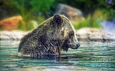 Grizzly Bear Enjoying A Dip In The Water  Poster by Jim Fitzpatrick