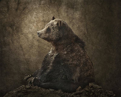 Grizzly Bear Portrait Poster