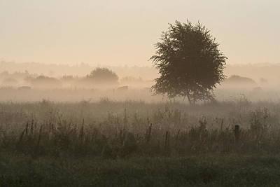 Ground Fog In Nature Area Dwingelderveld Poster