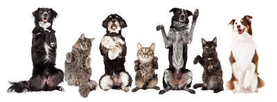 Group Of Dogs And Cats Together Begging Poster